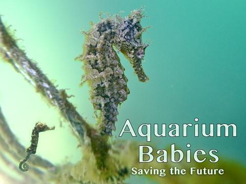 Aquarium Babies: Saving the Future