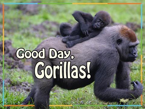 Good Day, Gorillas