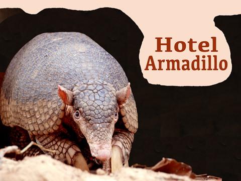 Hotel Armadillo