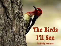 The Birds I'll See