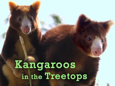Kangaroos in the Treetops